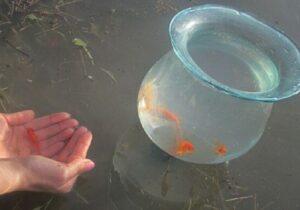 سبزه و ماهی قرمز در رودخانه رها نکنید