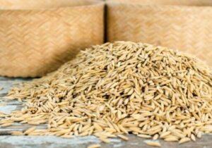 توزیع ۲۱ هزارتن بذر اصلاح شده در آذربایجان غربی