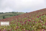 اختصاص۱۵۰۰ میلیارد تومان وام برای کشت گیاهان دارویی