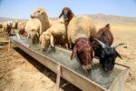سهم آب مصرفی دامها نصف مصرف آب آشامیدنی روستاییان کلاله