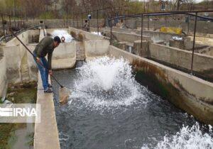 تولید سالانه ۳۹۰ تن ماهی در مهاباد