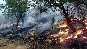 اعزام۱۱۰نیروی تازه نفس برای مهار آتش جنگلهای کردکوی