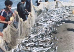آغاز فصل صید ماهیان استخوانی